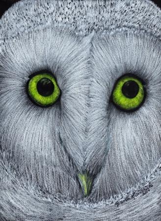 Owl_4web