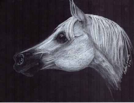Horse 4 web